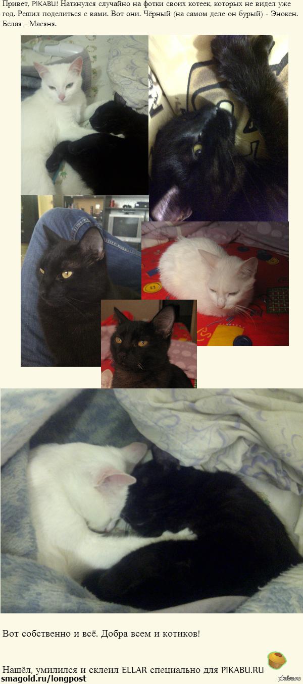 Мои ЧБ котейки.