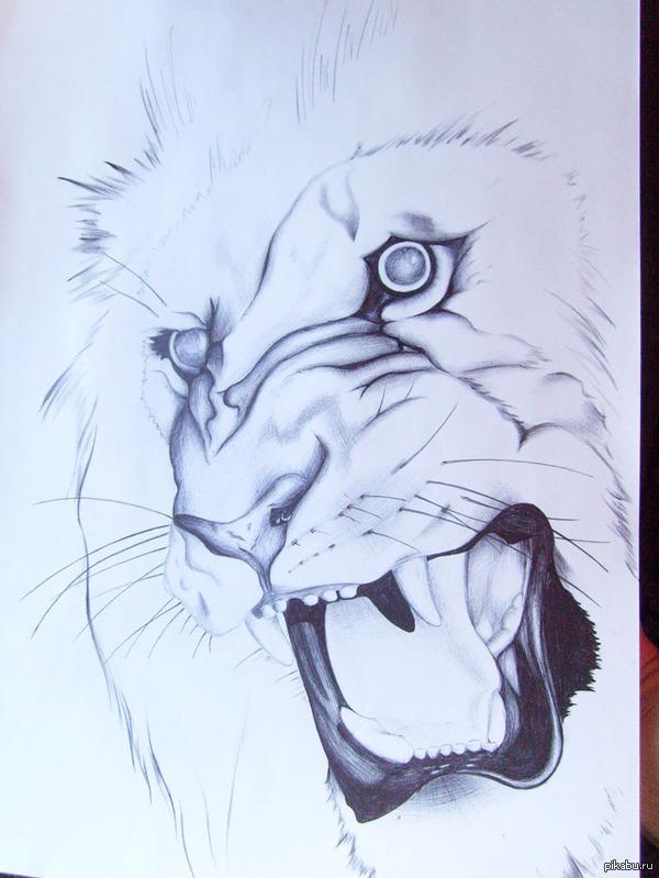Скетч льва Шариковая ручка, А3