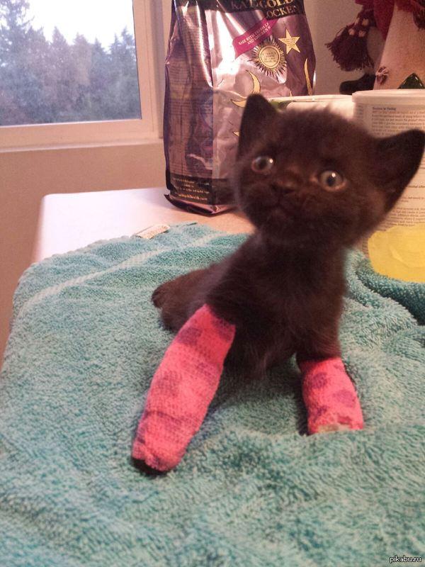 Болячки. титан. лечение.  9 Комментариев. кот.  261. Котик болен.