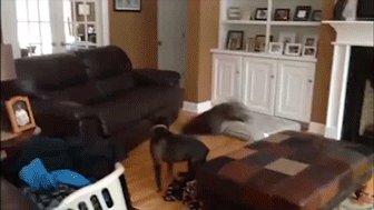 Привел нового пса в дом...