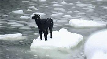 Российский моряк рискуя жизнью спас собаку и вы помогайте братьям своим ближним