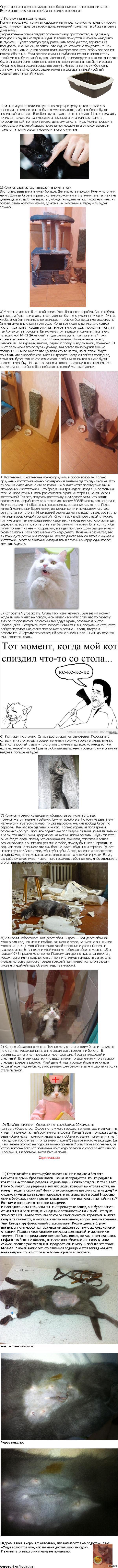 Как воспитать котенка, а не быдло.