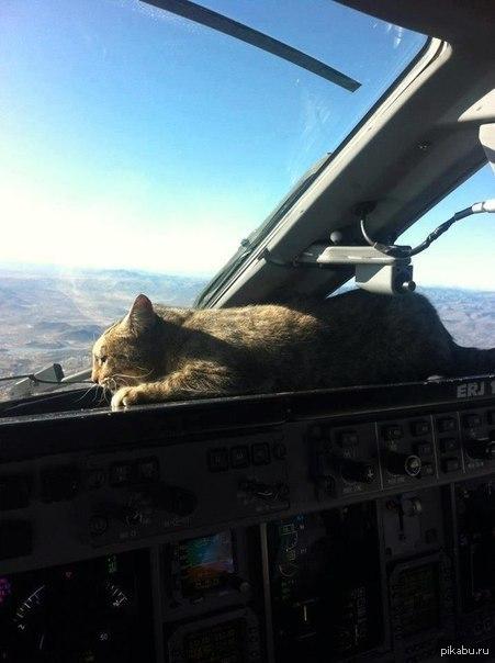 Кот сделает любую обстановку уютнее Баянометр молчал.