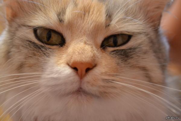 Мой котик смотрит на фотик как на ...=) =)