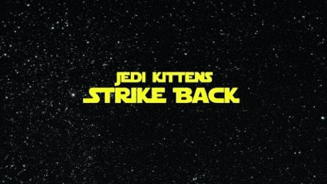 Звёздно-кошачьи войны