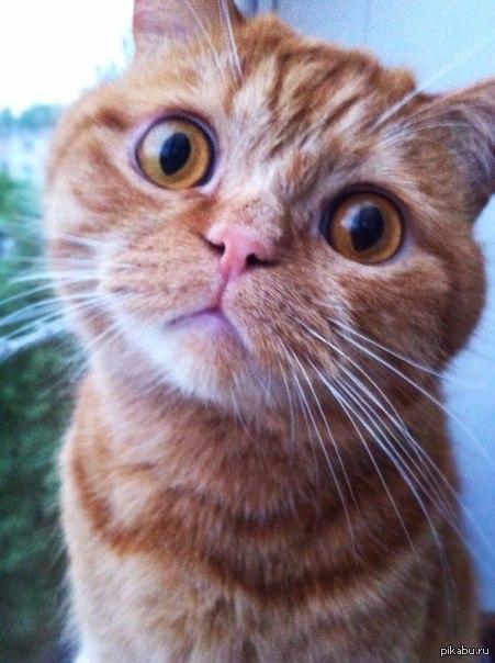 Про кота сёму