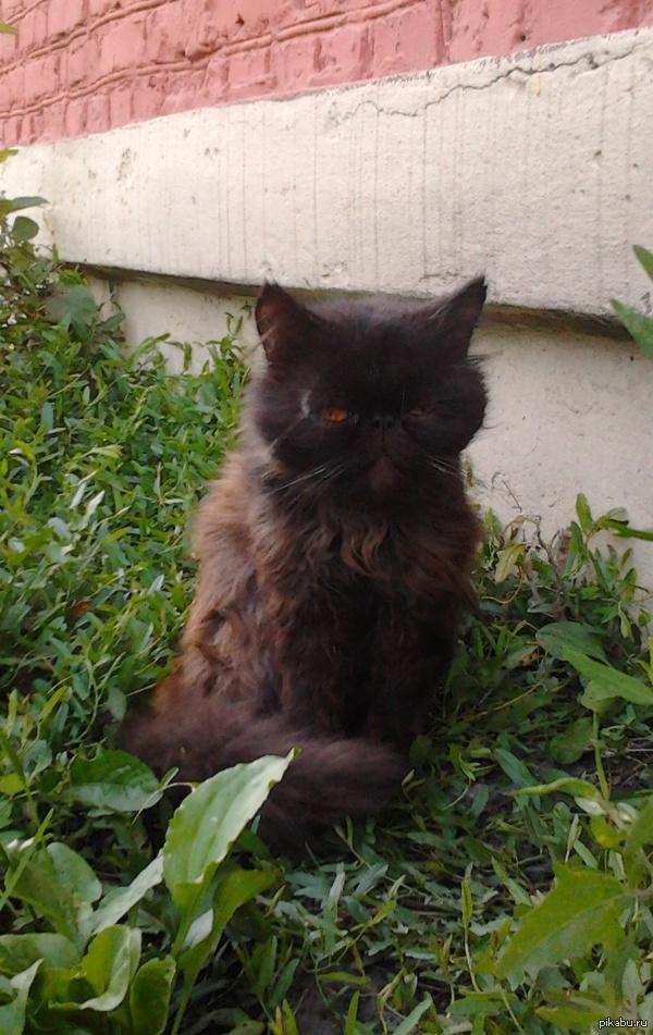 Это просто кот,не нравится листайте дальше.