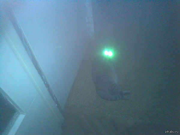 Сфотографировал кошку ночью... Простите за качество.