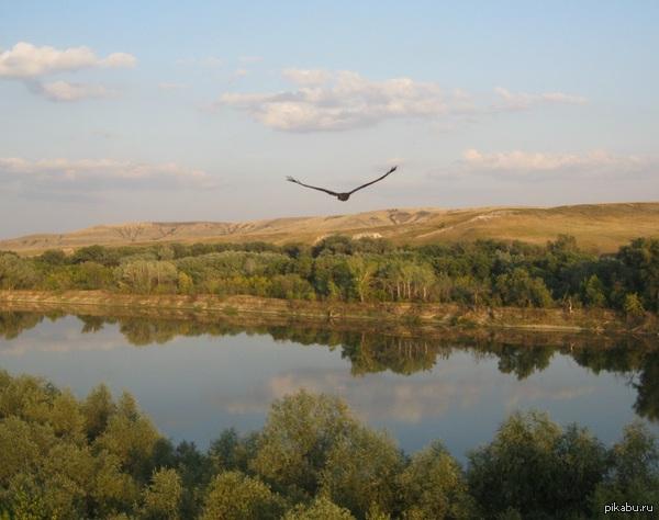 Снова в честь пятницы Орёл степной настигнут над берегами Дона. Из крайнего вылеты на парамоторе.