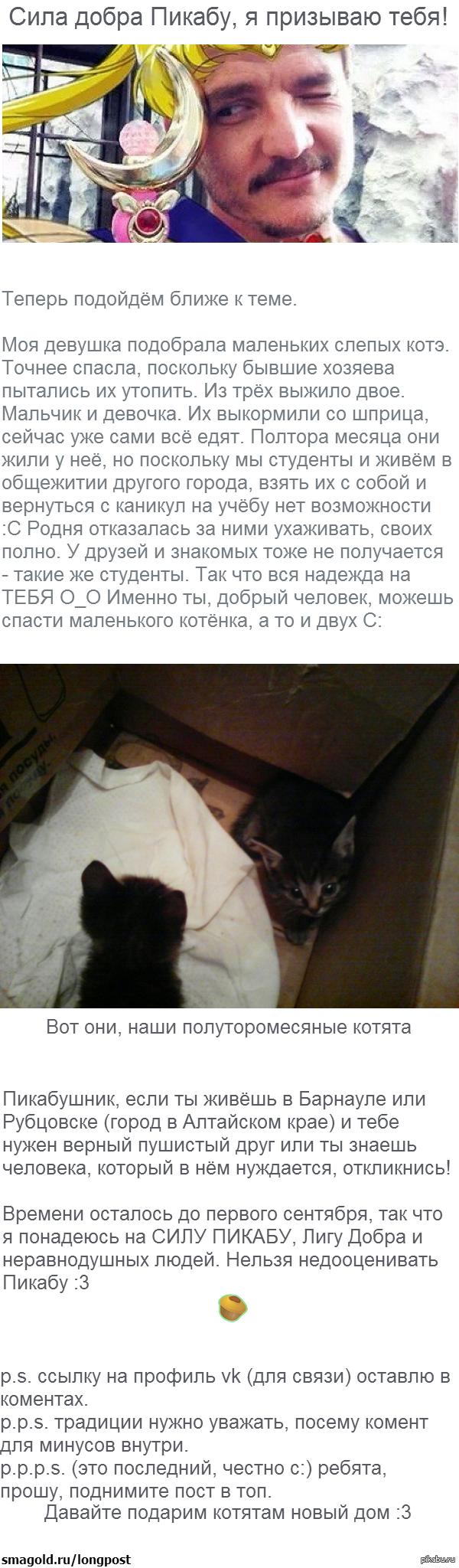 Котятки :3 Лига добра, нужна помощь >.<