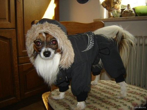 первый пост, выставлю своего Собакена!
