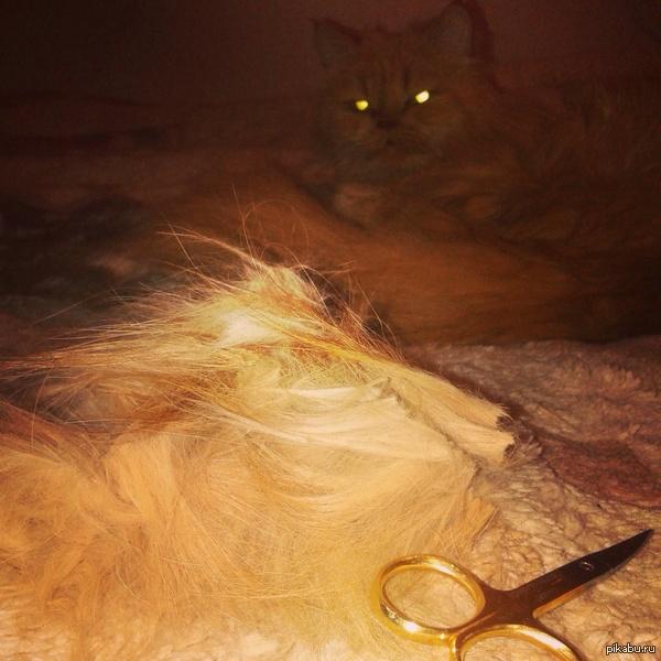 Теперь я боюсь спать Месть кота близка