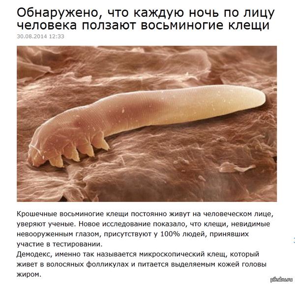 Спокойной ночи всем mirfactov.com/obnaruzheno-chto-kazhduyu-noch-po-litsu-cheloveka-polzayut-vosminogie-kleshhi/