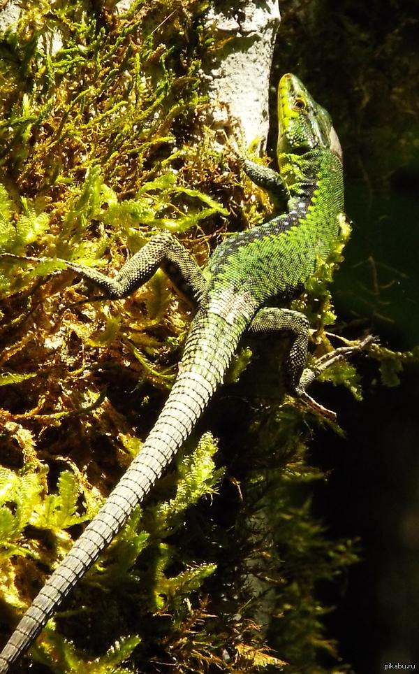Лесной дракончик. Просто удачное фото.
