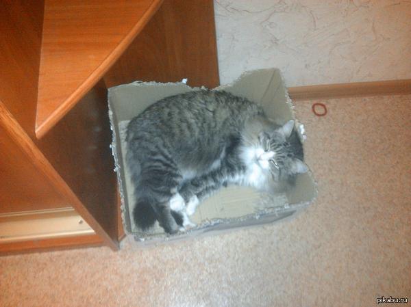 Сегодня выходной, отдыхаем. И мой кот меня поддерживает.  P.S.: кому интересно могу ещё выложить подборку забавных фоток с котом:)