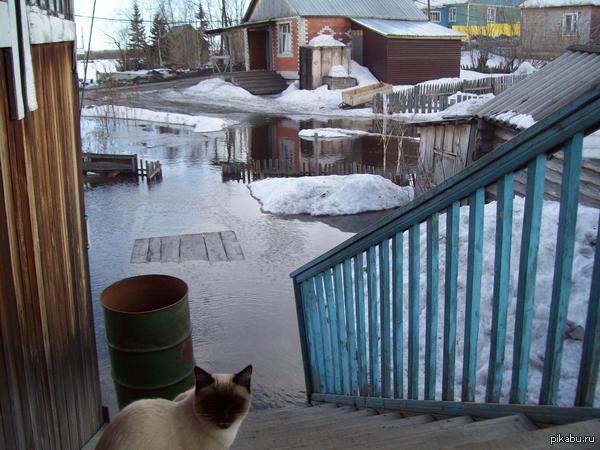 Мой кот в 2010 году.