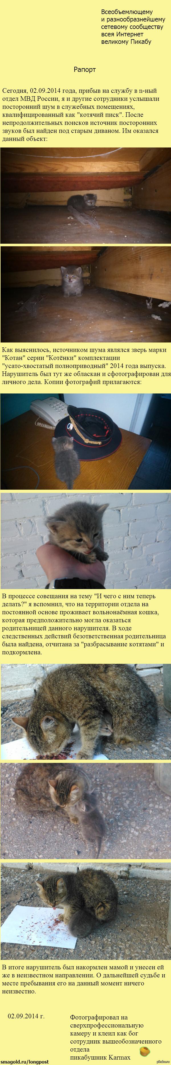 Рапорт о происшествии с семейством котейкиных