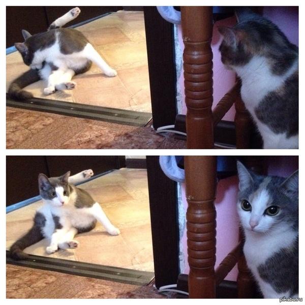 Спалилась) Когда я принес домой кота из подъезда, моя кошка пыталась сделать вид, что он ей безразличен
