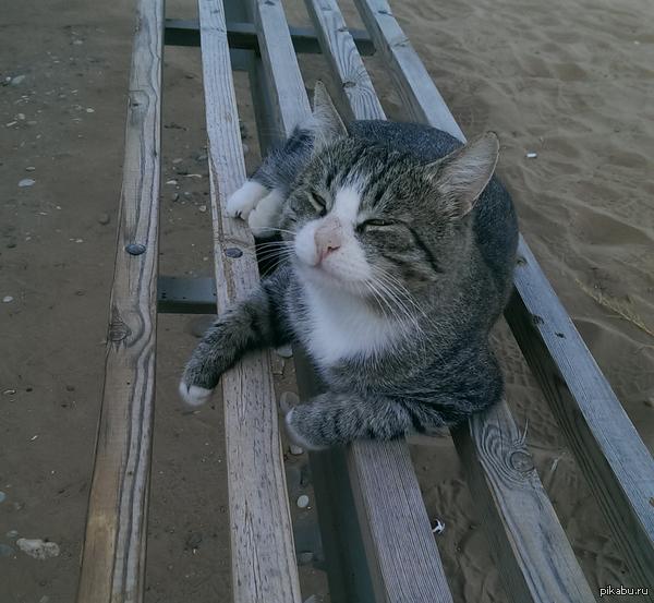 Милый котик Всем хорошего настроения^^
