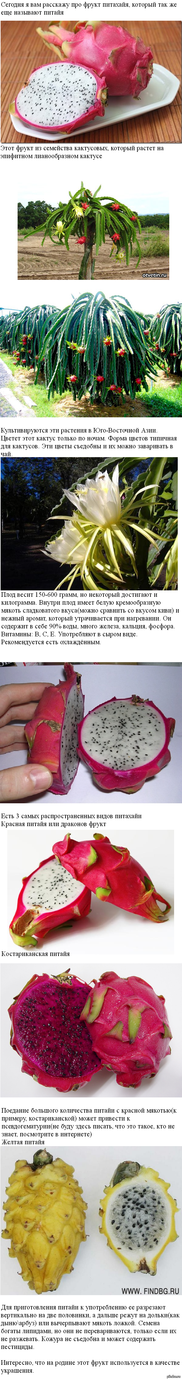 Питахайя или Драконье сердце экзотический фрукт 1410607472_562685349
