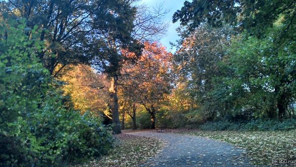 Солнце окрасило деревья в парке Гуляла сегодня в парке с собакой и увидела это, сняла на мобильник, был бы фотоаппарат, было бы красивее...