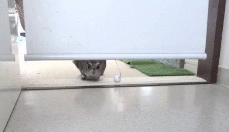 А что это вы тут делаете?