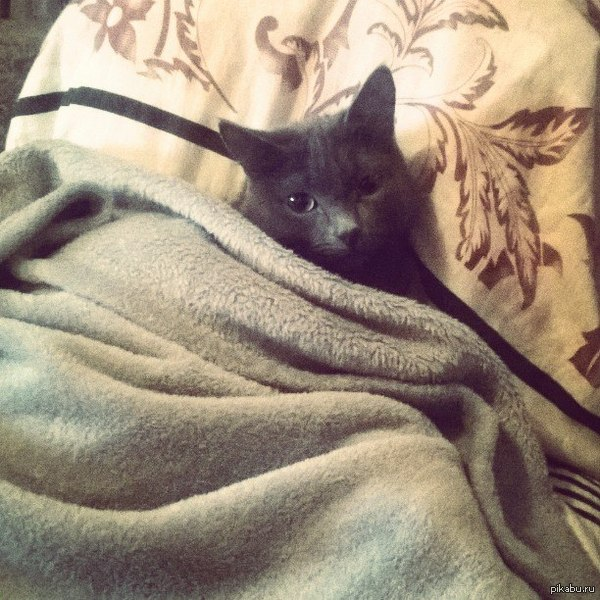 Когда коту холодно
