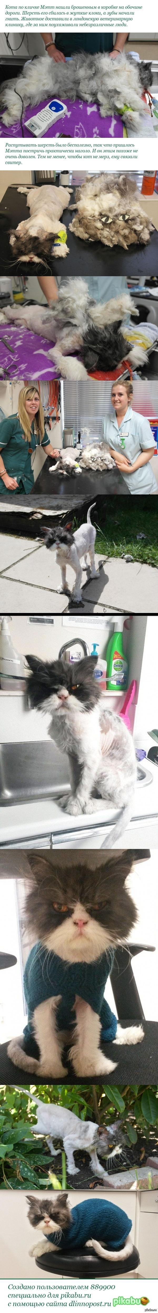Брошенный кот Мэтт до и после стрижки