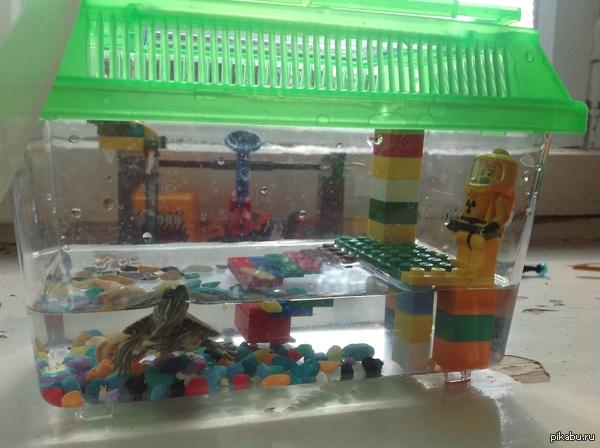 Обустроил черепахе аквариум...