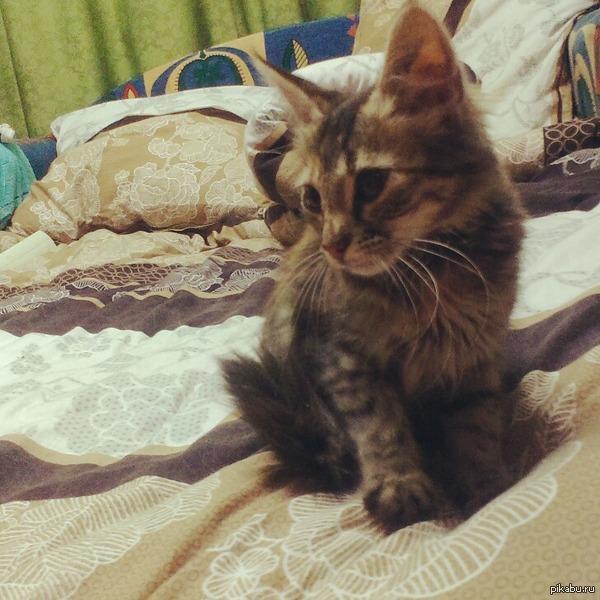Помогите :( подбросили котеночка, идут морозы , оставить не могу   Днепропетровск приюти малышку