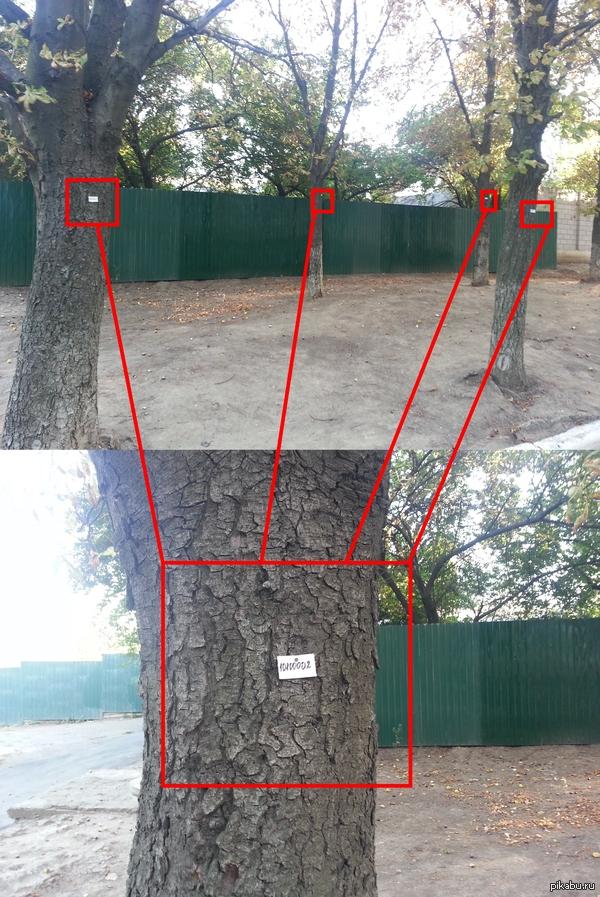 Маразм крепчал. Инвентарный номер на деревьях. Ну объясните мне, зачем?