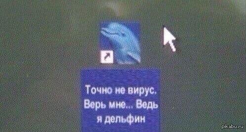 Верьте дельфинам