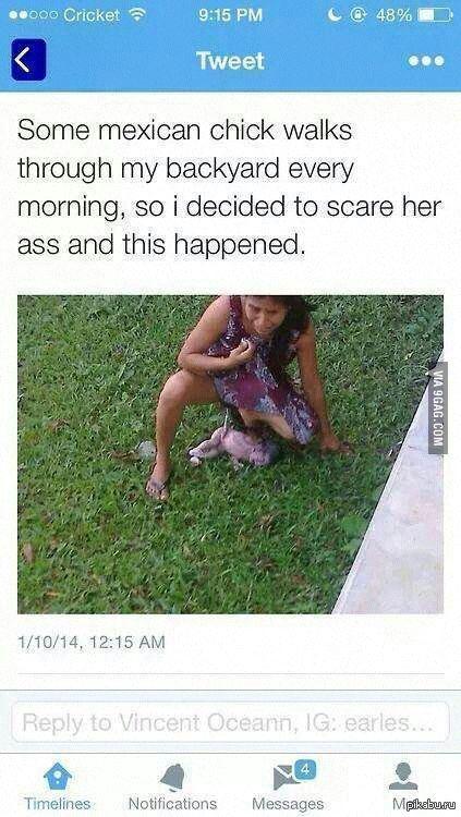 У меня во дворе постоянно гуляла одна мексиканка. Как-то раз я решил ее напугать. Вот к чему это привело.