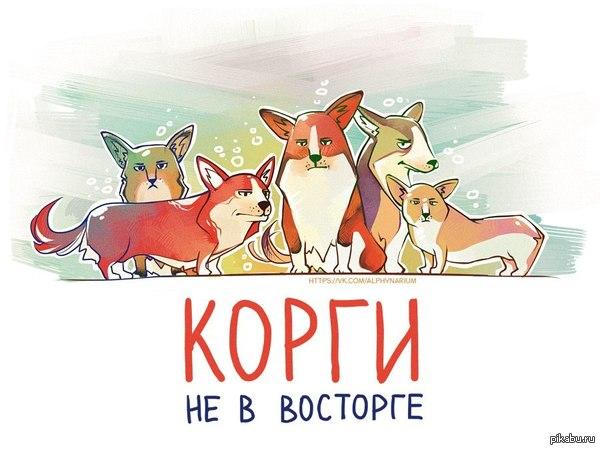 Корги))