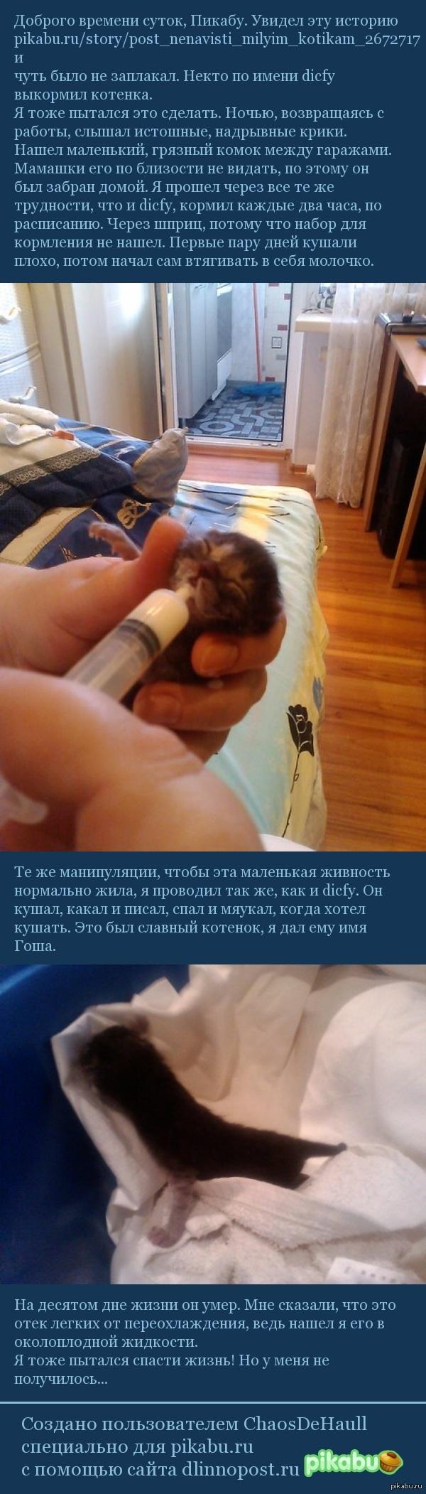 "Котенок <a href=""http://pikabu.ru/story/post_nenavisti_milyim_kotikam_2672717"">http://pikabu.ru/story/_2672717</a> история"