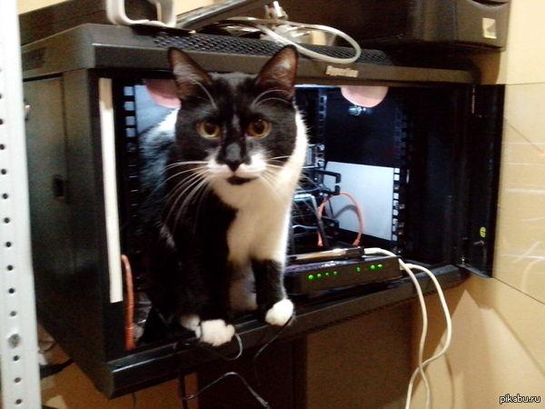 Админский кот Пинги проверил, пакеты ходят. Проблемы на Вашей стороне.