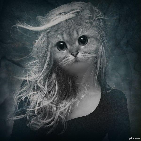 извините, был напуган вот вам котик