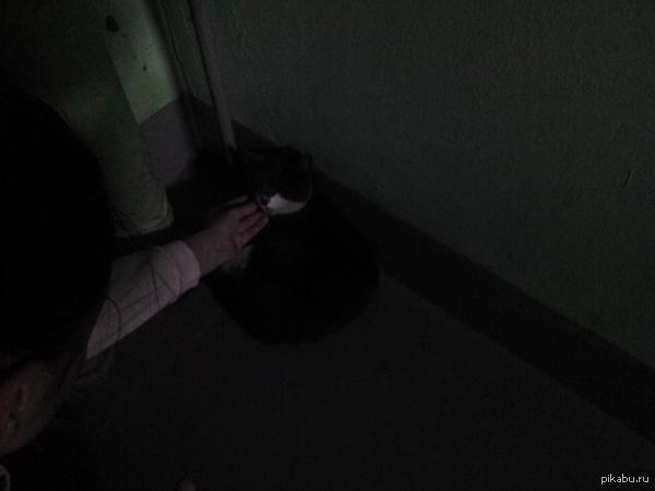 Нужна помощь Лиги Добра! У нас в подъезде появилась кошечка на первый взгляд домашняя, возраст около года. Кормили её а сегодня увидел что у неё сломана лапка. Взять не можем. Помогите.