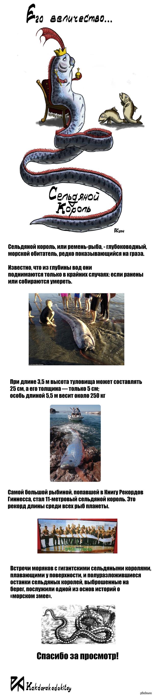 Сельдяной король или ремень-рыба