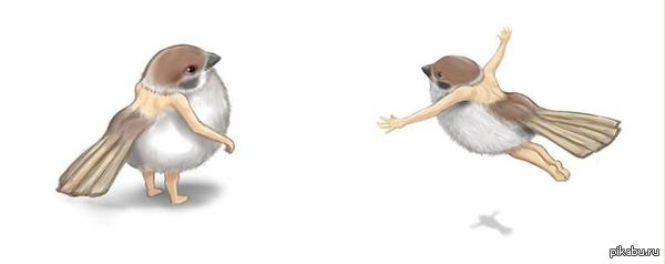 Челоёбушек Новый вид птиц под названием ЧЕЛОЁБУШЕК, если вы их встретели значит вы в Чернобыле!