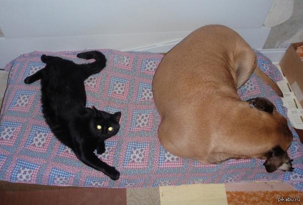 Даже самая широкая кровать тесна для двоих , если один из этих двоих кот :) К слову, рядом собака - бульмастиф...