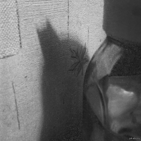 Бэтмен атакует>.< Вот так сижу, пью чай на кухне...и тут хоп, оказывается меня преследует Бэтмен, наблюдает, выжидая свой час... Может надо было чаем напоить или что?:D