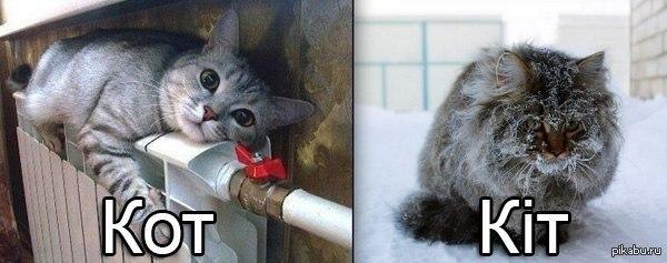 Кот vs Kiт