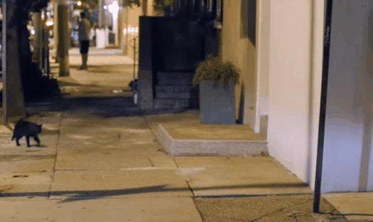 В переулке .. Дело было вечером , делать было нечего.