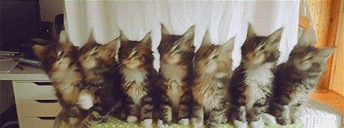 """Котята тащатся под музыку) или """" Когда слышишь хороший бит"""""""