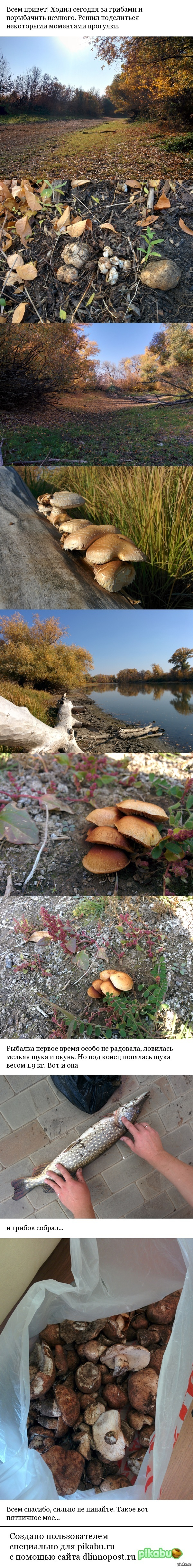 Моя пятничная прогулка Ходил на рыбалку и за грибами, благо работа прямо в лесу))