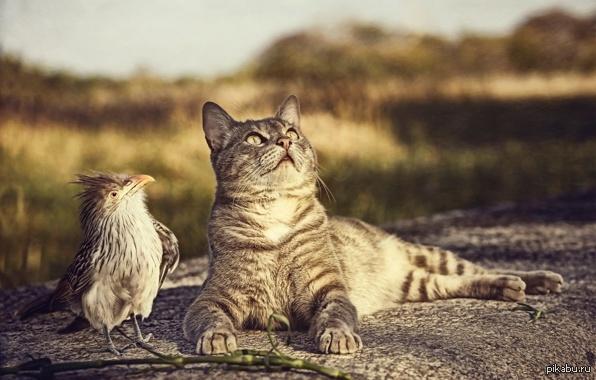 Котейка и птичка