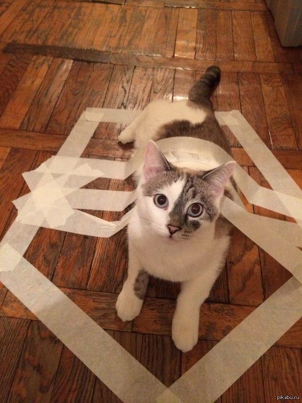 Коты сидят в кругах