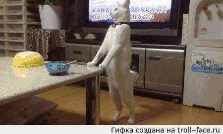 Cat teaching baby to walk