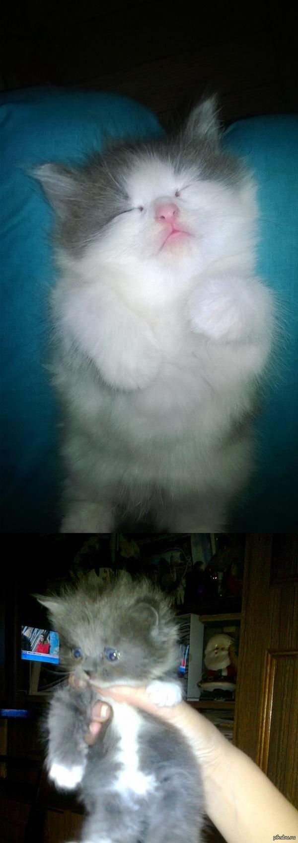 Комочки счастья Есть котята,некому содержать. Если не заберут хэппи энда не будет. Санкт-Петербург звонить 8911-225-69-29  Не топите